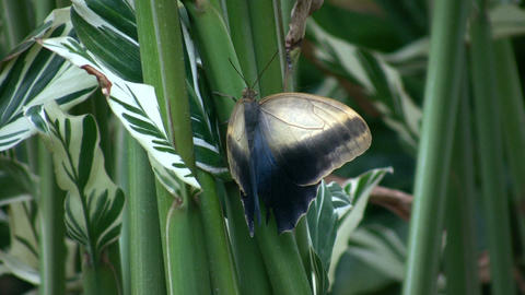 Butterfly resting on a leaf (High Definition) Stock Video Footage