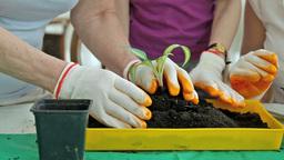 Springtime Planting stock footage