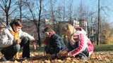 Children picking golden maple leaves Footage
