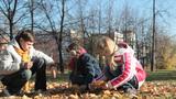 Children picking golden maple leaves Footage