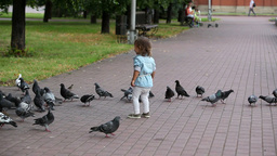 Little Girl Playing Between Pigeons Footage