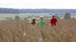 Group Of Carefree Kids Running Across The Cultivated Land Filmmaterial