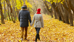 Rearview of a happy couple walking unhurriedly through the autumn forest Footage