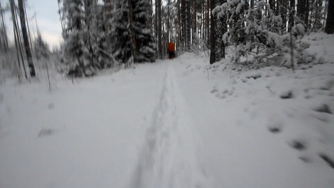 Hikers in winter wood Footage