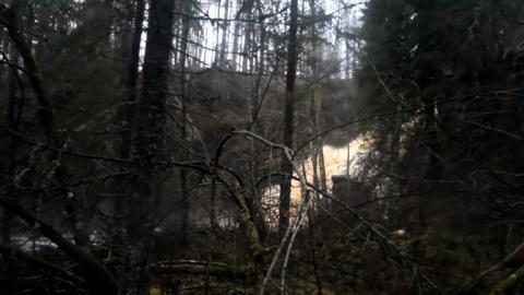 Waterfallfall Hidden In The Wood stock footage