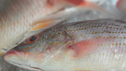 Fish Market Three Red Fish Dolly stock footage