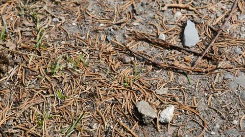 Wood ants Footage