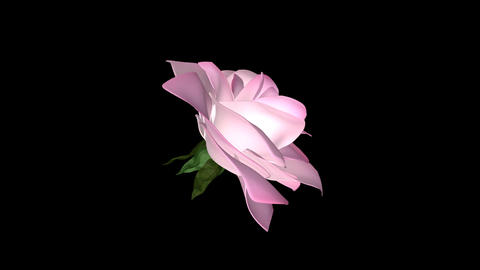 Pink Rose Flower - Rotating Close Up Animation