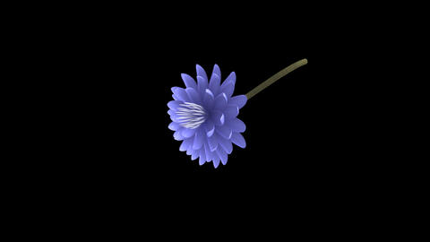 Blue Lotus Flower - Rotating Particle Animation