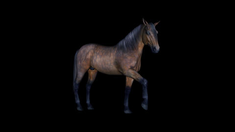 Bay Horse I - Loop - Alpha Channel Animation