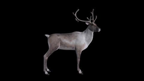 Reindeer IV - Loop - Alpha Channel Animation