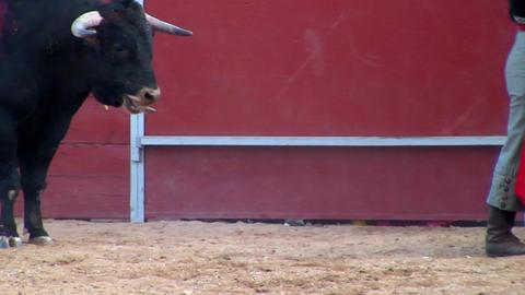 spanish bullfight Animation