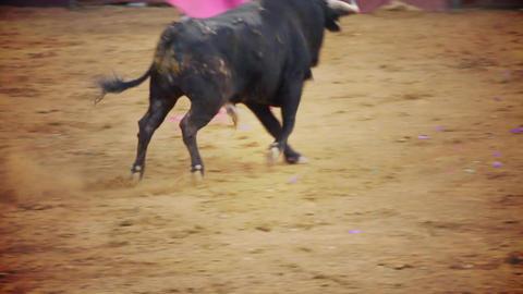 spanish bullfight Stock Video Footage