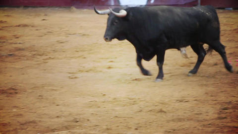 spanish bullfight Live Action