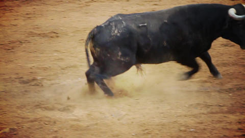 Spanish Bullfight stock footage