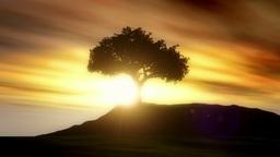 Magic Tree Animation
