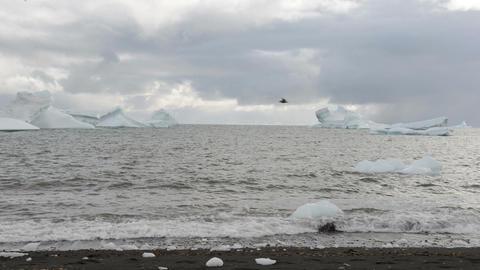 Icebergs Footage