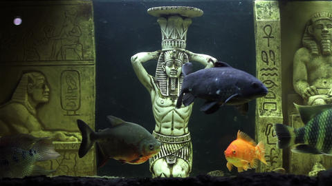 Aquarium Fish And Ornamental Statues stock footage