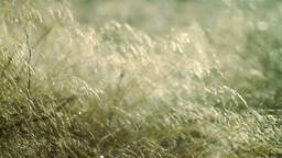 Forest detail, beautiful abstract texture of grass Footage