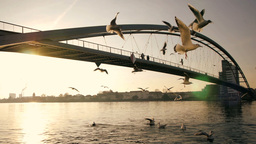 birds feeding. swarm of birds. sunset dusk Footage