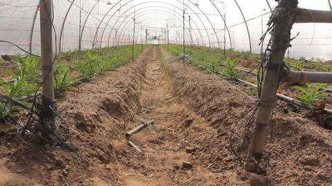 organic plants greenhouse food agriculture Live Action