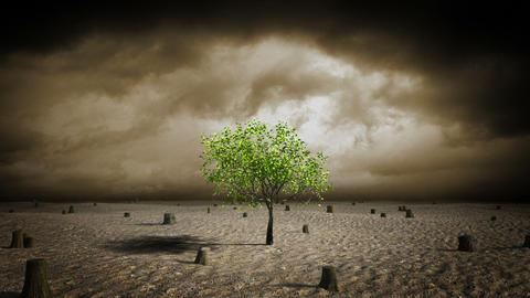 Growing tree in desert Stock Video Footage