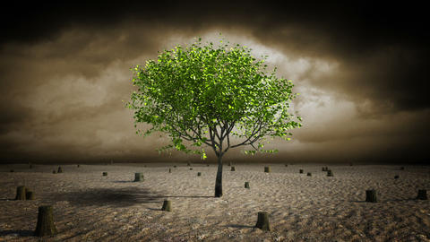 Growing tree in desert, Stock Animation