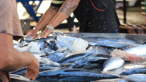 Fresh Fishes Form Andaman Sea 0