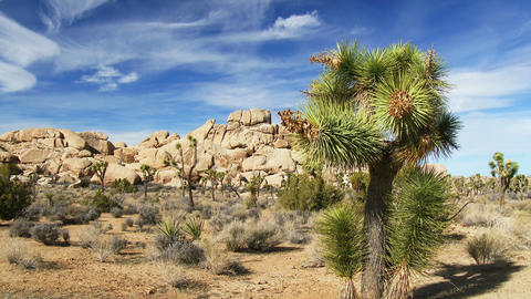 Joshua Tree National Park Footage