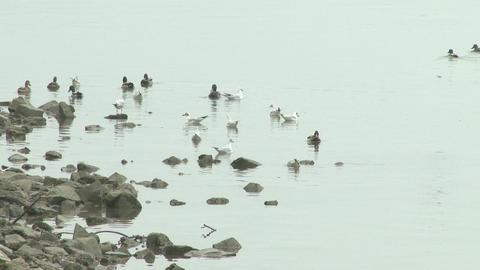 4K Birds River Danube Winter 2 Footage