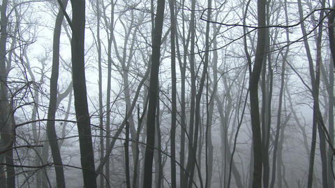 4 K Super Scary Winter Foggy Forest 3 pan Footage