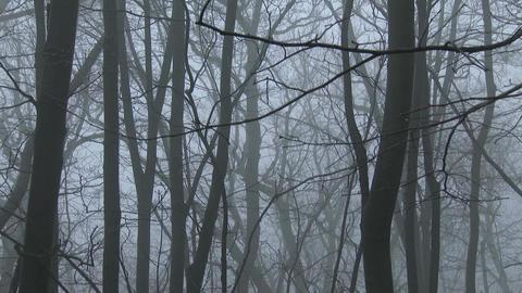 4K Super Scary Winter Foggy Forest 5 tilt Footage