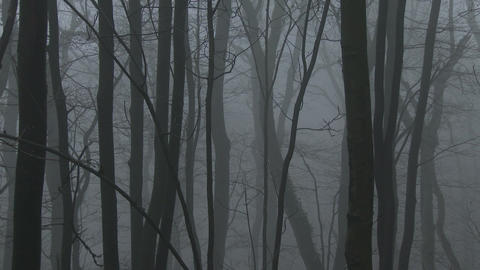 4K Super Scary Winter Foggy Forest 7 zoom Footage