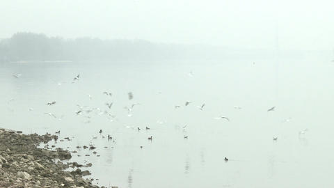 Birds River Danube Winter 1 Footage
