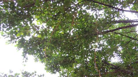 Tree 2 動畫