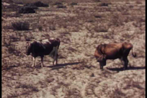 A 1948 documentary film about milk, dairy and milk Live Action