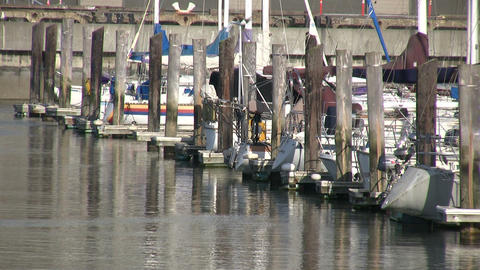 Boats and yachts are gently floating in the docks Live Action