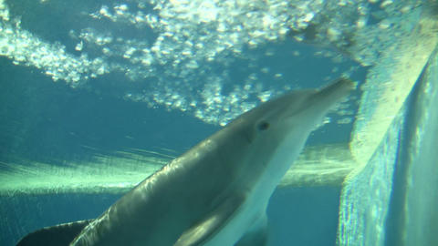 Dolphin swims and eats under blue sunny water (High Definition) Footage