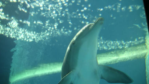 Dolphin swims and eats under blue sunny water (High... Stock Video Footage