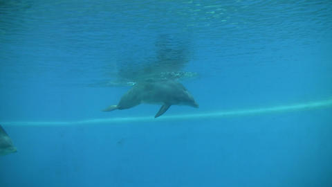 Dolphins gracefully swim under the blue sunny water (High... Stock Video Footage