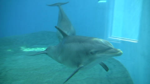 Dolphins gracefully swim under the blue sunny water (High Definition) Footage