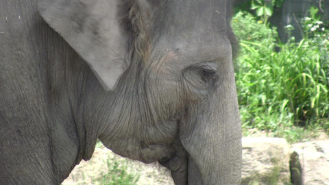 An elephant relaxes in the shade (High Definition) Stock Video Footage