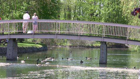 People are feeding geese from a small bridge (High... Stock Video Footage