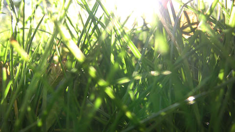 Closeup of green grass illuminated by the sunlight (High Definition) Footage