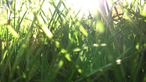 Closeup of green grass illuminated by the sunlight (High... Stock Video Footage