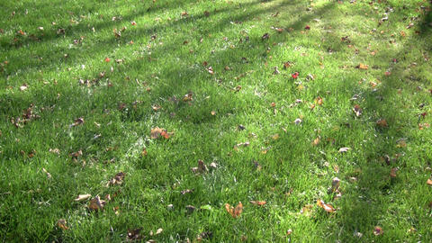 Green grass sways in breeze on sunny day (High Definition) Stock Video Footage