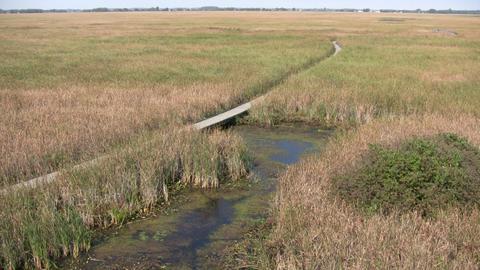 Boardwalk winds it way through the Canadian wetlands... Stock Video Footage