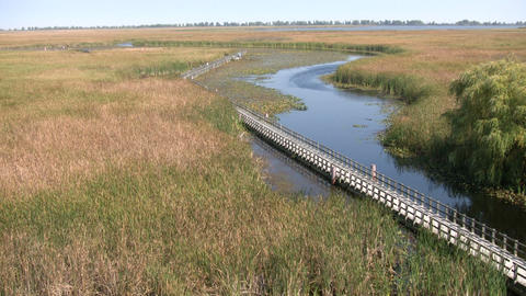Boardwalk winds it way through the Canadian wetlands... Stock Video Footage