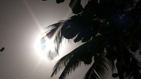 Palm tree's silhouette sways amidst the sunny sky (High Definition) Footage