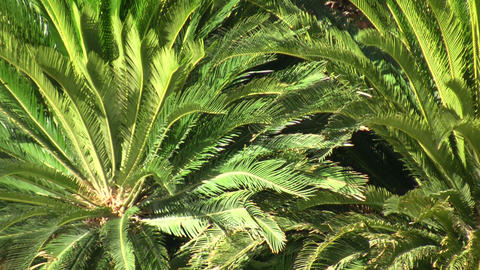Tropical plants gently sways in the breeze (High Definition) Footage